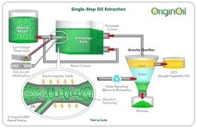Use of Algae in Electricity Generation 2