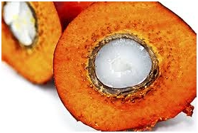 Palm Kernel Oil for transformers