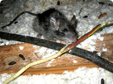 power-system-failures-rodents