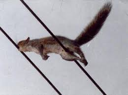 power-system-failures-squirrels